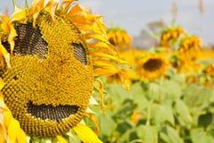 Het Teken van de zonnebloem Royalty-vrije Stock Foto's