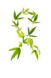 Het teken van strijdkanker van marihuanabladeren dat wordt gemaakt Royalty-vrije Stock Fotografie