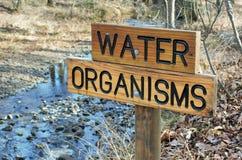 Het Teken van waterorganismen stock foto