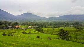 Het terras van de Jatiluwihrijst in Bali, Indonesië Stock Fotografie