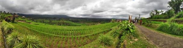 Het terras van de Jatiluwihrijst met zonnige dag en groene wildernissen in Ubud, Bali stock afbeelding