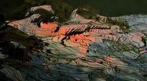 Het terras van de rijst Stock Foto's