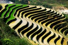Het terras van de rijst Royalty-vrije Stock Fotografie