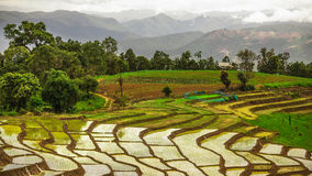 Het terras van de rijst Royalty-vrije Stock Foto