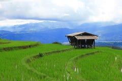 Het terras van de rijst Gefotografeerd op Bali Royalty-vrije Stock Foto's