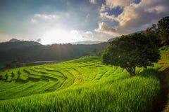 Het terras van de rijst Gefotografeerd op Bali Stock Afbeelding