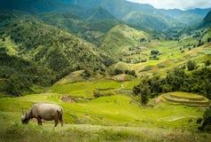 Het terras van de rijst Gefotografeerd op Bali Stock Fotografie