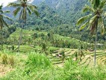 Het terras van de rijst Gefotografeerd op Bali Royalty-vrije Stock Afbeeldingen