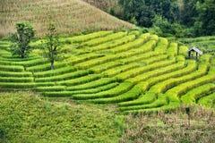 Het terras van de rijst op berg Stock Foto's