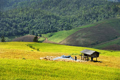 Het terras van de rijst op berg Stock Foto