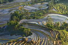 Het terras van Hani, Yunnan, China03 Stock Foto
