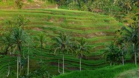 Het terrasgebied van de padie Stock Fotografie