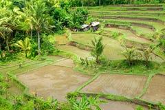 Het terrasgebied van de rijst, Ubud, Bali, Indonesië. royalty-vrije stock foto's