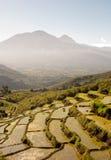Het terrasvormige padieveld van Ripid Stock Foto's