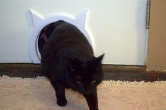 Het terugkomen van de kattebak Nevelige liefdes haar nieuwe kattendeur stock fotografie