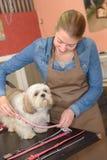 Het terugzetten van hond` s kraag royalty-vrije stock afbeelding