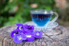 Het Thaise kruiden hete erwtensap of de Blauwe erwt bloeit, klaar die in een glas te drinken, op een houten vloer wordt geplaatst stock afbeelding