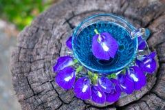 Het Thaise kruiden hete erwtensap of de Blauwe erwt bloeit, klaar die in een glas te drinken, op een houten vloer wordt geplaatst royalty-vrije stock afbeelding