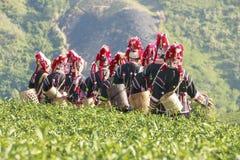 Het theeblad bij aanplantingsachtergrond is Akha-de vrouw van de heuvelstam royalty-vrije stock foto