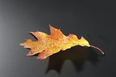 Het thema van de herfst stock foto's