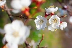 Het thema van de lente royalty-vrije stock afbeelding