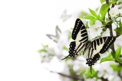 Het thema van de lente. Royalty-vrije Stock Afbeeldingen