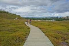 Het thermische park van Nieuw Zeeland, Wairakei, Taupo met toeristen op promenade stock foto's