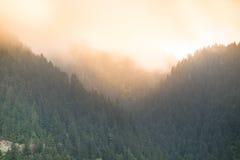 Het toenemen Zon over Mistig Bos Stock Foto's