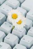 Het Toetsenbord en de bloem van de computer stock afbeeldingen