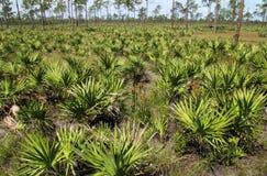 Het toneel Landschap van Florida Stock Afbeeldingen
