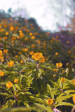 Het tot bloei komen in de lente van bosbloemen Stock Foto's