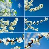Het tot bloei komen van takken stock afbeeldingen