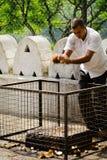 Het traditionele Aziatische kokosnoot breken om wensen te controleren Stock Foto