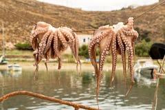 Het traditionele Griekse voedseloctopus drogen in de zon stock afbeelding