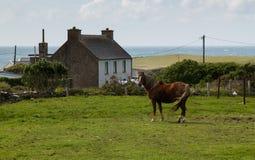Het traditionele huis van Ierland met paard Stock Afbeeldingen