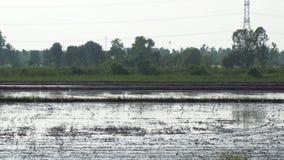 Het traditionele tractor ploegen bij schemer in platteland stock video