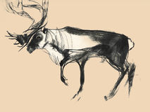 Het trekken op papier van herten op zwart-wit achtergrond Stock Foto's