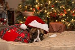 Het trekken van de Kerstboom Stock Foto