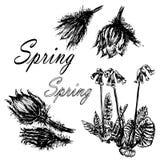 Het trekken van vastgestelde inzameling van bossleutelbloemen, eerste de schetsillustratie van de lentebloemen vector illustratie