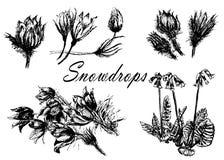 Het trekken van vastgestelde inzameling van bossleutelbloemen, eerste de schetsillustratie van de lentebloemen stock illustratie