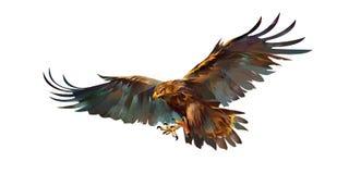 Het trekken van vliegende adelaar op witte achtergrond Stock Fotografie