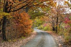 Het trillende bos van de kleurenherfst en een curvy weg Stock Fotografie
