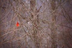 Het trillende hoofd rusten in een boom Stock Foto