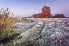 Het trillende landschap van de de herfstaard Grasrijke weide met rijp en kleurrijke bomen met rood gebladerte op horizon in de he stock afbeeldingen