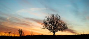 Het trillende silhouet van de dageraad enige boom Stock Afbeeldingen