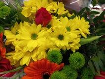Het trillende uitgelezen bloemen groeien Stock Afbeeldingen
