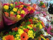 Het trillende uitgelezen bloemen groeien Stock Fotografie