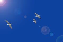 Het trio van zeemeeuwen Stock Afbeelding
