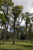 Het tropische bos Royalty-vrije Stock Fotografie