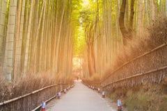 Het tropische bos van de bamboewildernis met het lopen manier Royalty-vrije Stock Afbeelding